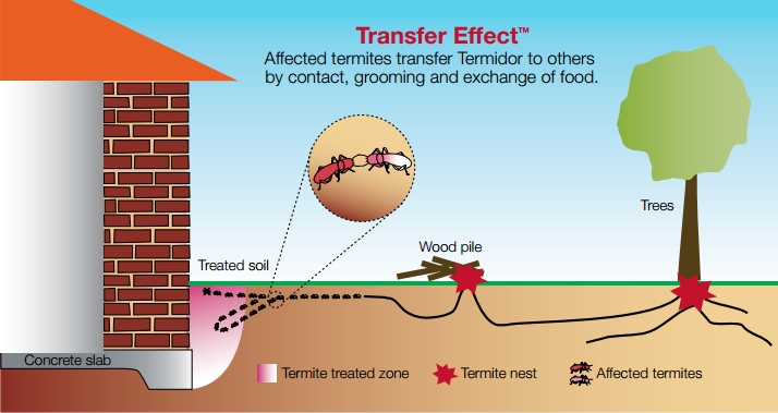 Termidor-Termite-Treatment-Arizona