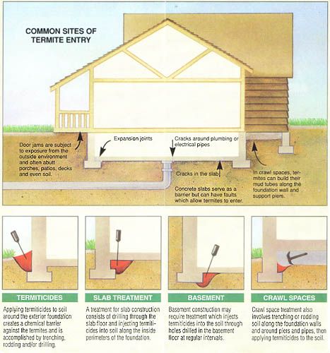 Termite treatment and control